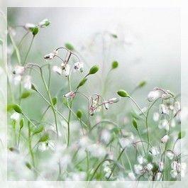 naturo fleur 0004