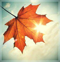 naturo automne