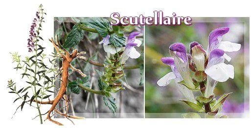 naturo scutellaire