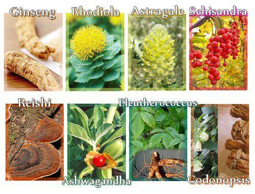 naturo adaptogene