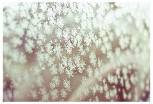 naturo hiver15