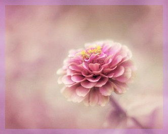 naturo flower 1