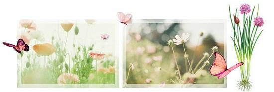 naturo printemps