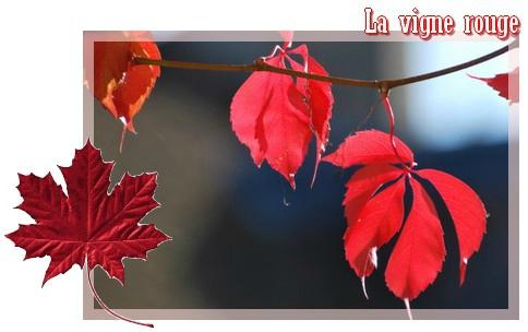 naturo vigne rouge