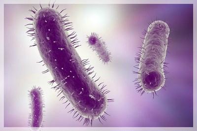 naturo microbiote4
