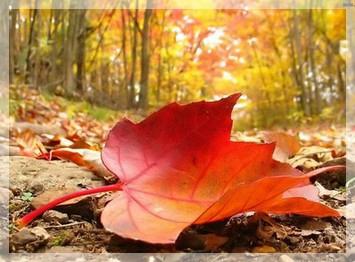 naturo automne 2
