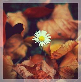 naturo automne5