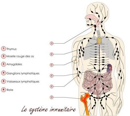 naturo immunité schéma1