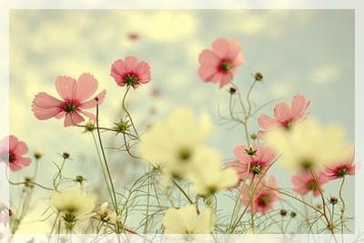 naturo fleur003