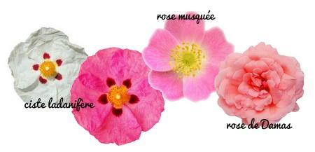 naturo rose fleurs ciste musquee damas