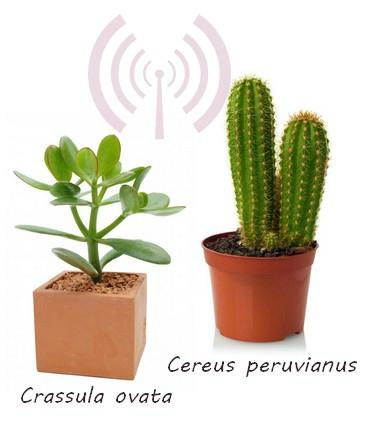 naturo ondes electro plantes