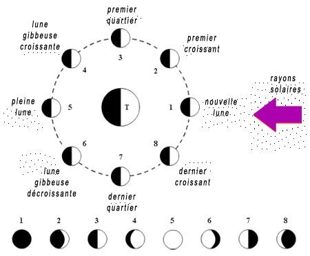 naturo lune phase