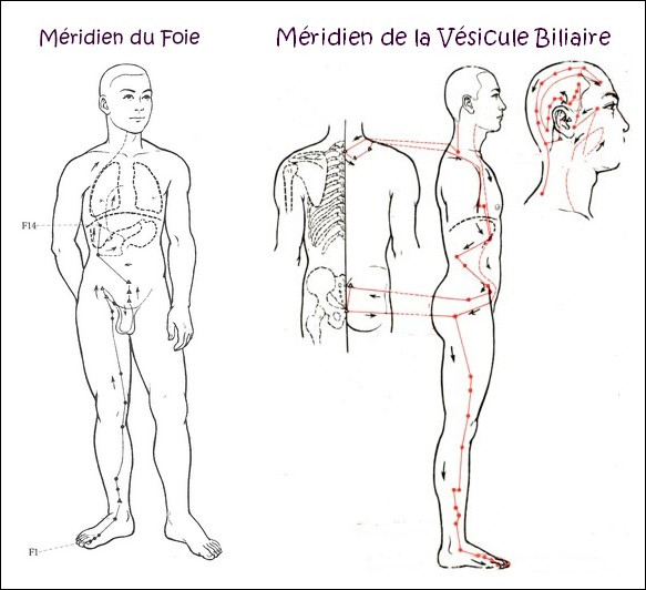 meridien foie VB